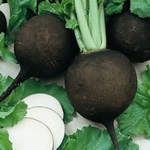 black spanish radish